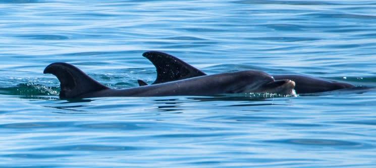 Cruzeiro Get Zen® Sunset - Rota dos Golfinhos | Até 3 Horas no Sado c/ Mini Buffet | Criança ou Adulto