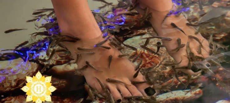 Garra Rufa Experience | Mãos, Pés & Corpo Inteiro | Harmonya