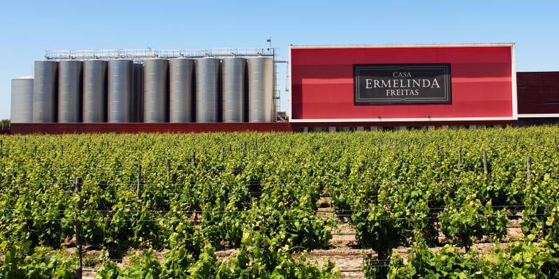Visita às Vinhas & Prova de Vinhos c/ Degustação de Produtos Típicos - 1 ou 2 Pessoas | Casa Ermelinda Freitas - Marateca