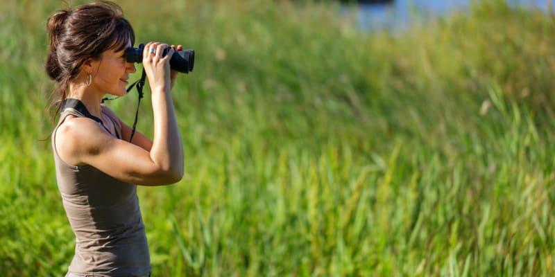 Observação de Aves no EVOA | Vila Franca de Xira