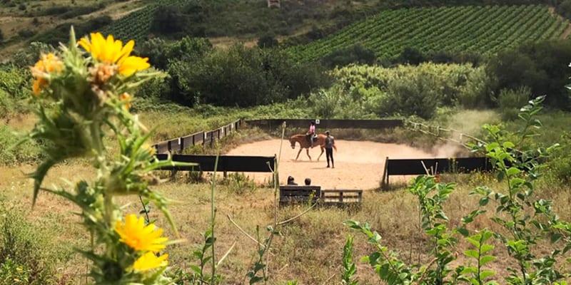 Baptismo a Cavalo em Picadeiro ao Ar Livre para 2 Pessoas | Herdade da Estrela - Torres Vedras