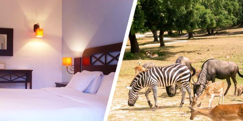 Hotel Rural Monte da Lezíria - Alentejo | Estadia com Opção Passeio a Cavalo ou Entradas no Badoca Safari Park