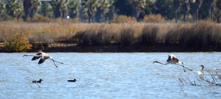 Birdwatching na Lagoa dos Salgados | 4 Horas na Natureza do Algarve com a Seacret Tours