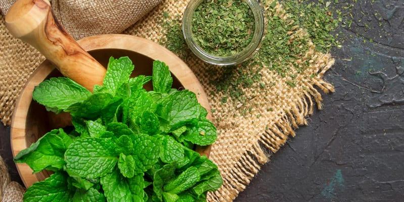 Aula Online em Directo - 1h   Plantas Aromáticas, Condimentares e Medicinais   Consultua