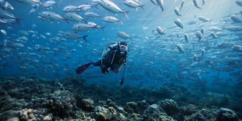 Baptismo de Mergulho | Scorpio Madeira Diving Center | 1 ou 2 Pessoas