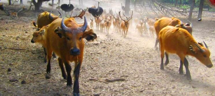Safari VIP no Badoca com Visita Guiada em Jipe Privado | Dia Espectacular na Natureza!