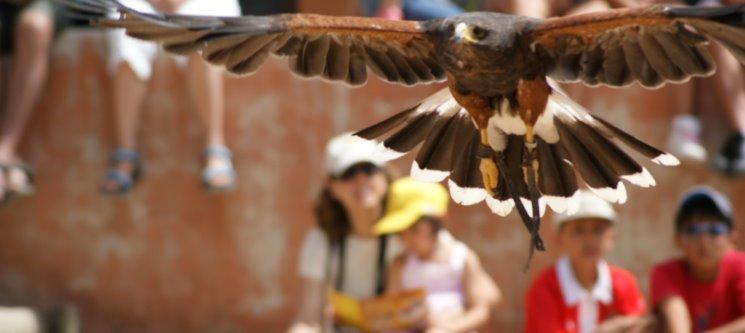 Experiência de Falcoaria + Visita ao Badoca Safari Park | Um Dia Fantástico na Natureza!