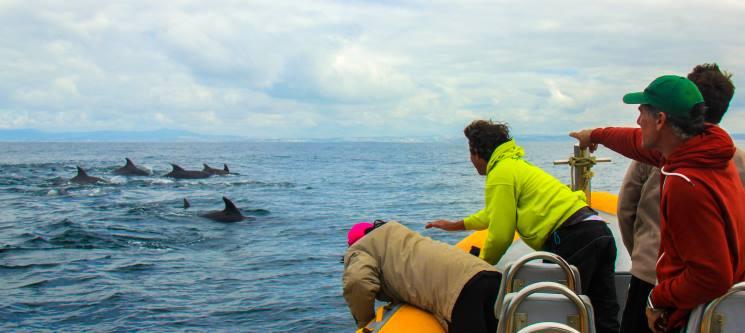 Passeio de Barco c/ Observação de Golfinhos para Dois | 2 Horas | Tróia-Setúbal - Sado Emotion