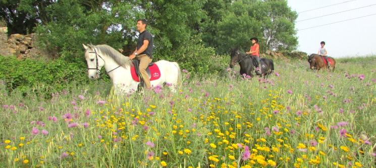 Fantástico Passeio a Cavalo pela Lezíria do Tejo | 1h | 2 Pessoas