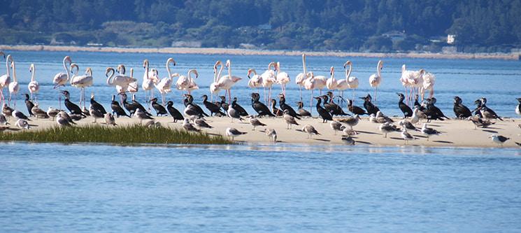Observação de Aves na Reserva Natural do Estuário do Sado para Dois   3 Horas