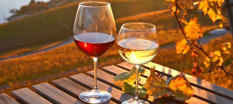 Prova de Vinhos, Azeite e Mel + Opção Cabaz 2 Vinhos «Casal da Fonte» | Azambuja