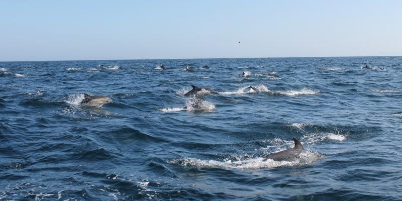 Observação de Golfinhos na Costa Algarvia! Criança ou Adulto | Beach Hut Watersports - Praia da Luz