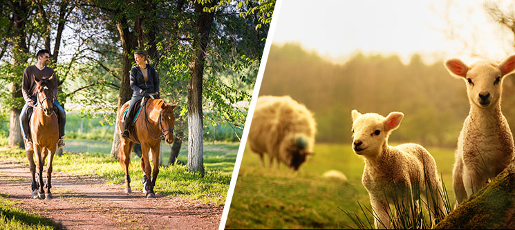 Visita à Quinta c/ Opção de Baptismo ou Passeio a Cavalo | 2 ou 3 Pessoas | Vila Franca de Xira