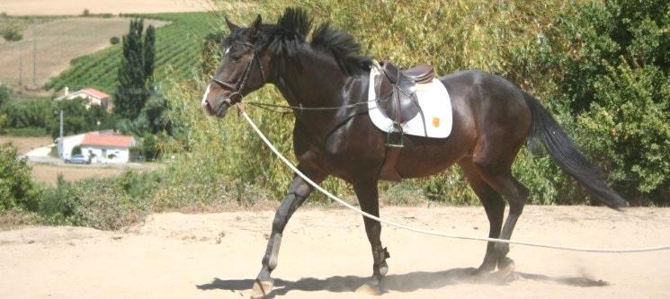Dia Romântico na Quinta & Almoço para Dois & Iniciação ou Passeio a Cavalo | Alenquer