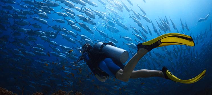 Snorkeling em Área Marinha Protegida dos Açores | Até 3 Horas | 1 ou 2 Pessoas