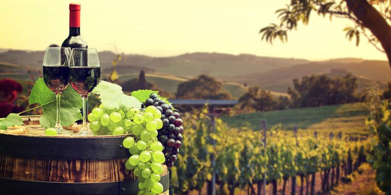 Visita à Adega + Prova de Vinhos c/ Degustação de Produtos Regionais | Casa Agrícola Nicolau - Lisboa