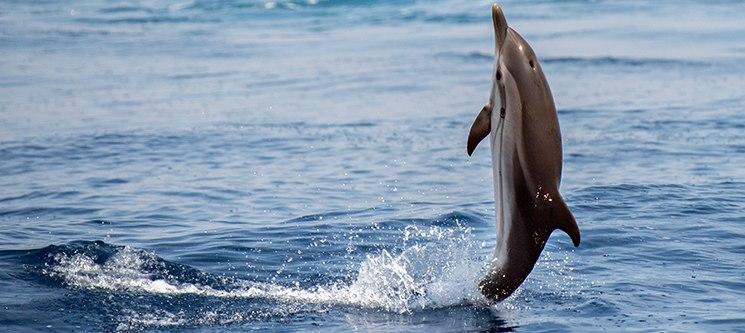 Observação de Baleias e Golfinhos nos Açores | Picos de Aventura - Ponta Delgada