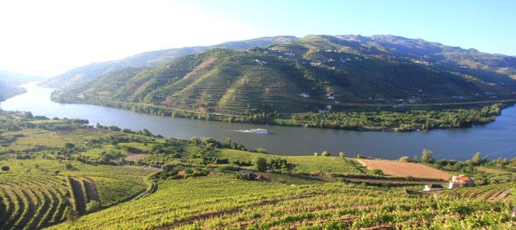 Passeio de Barco no Douro para Dois | Régua - Pinhão - Régua | Tomaz do Douro