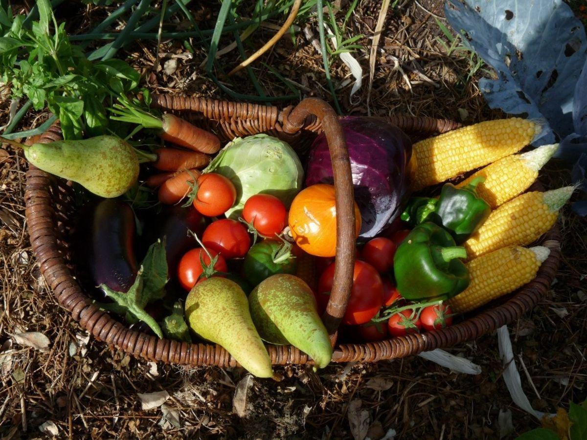 Les 7 choses à faire dans votre jardin en mai