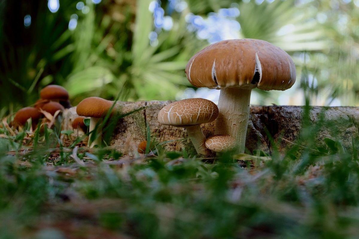 7 choses à savoir sur la reproduction des champignons