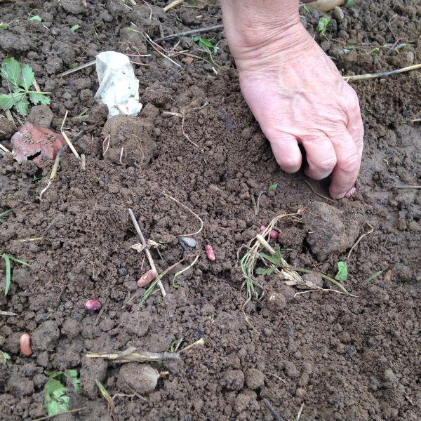 Les 7 choses à faire (ou ne pas faire) dans votre jardin en juillet
