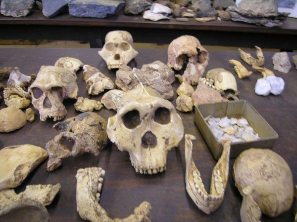 7 mystères dans 7 grottes d'HOMO à SAPIENS