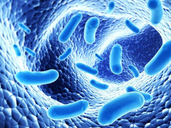 Renforcer votre système immunitaire avec 7 compléments alimentaires