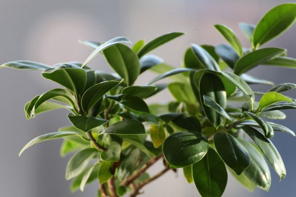 7 plantes et fleurs TOXIQUES pour les ANIMAUX domestiques