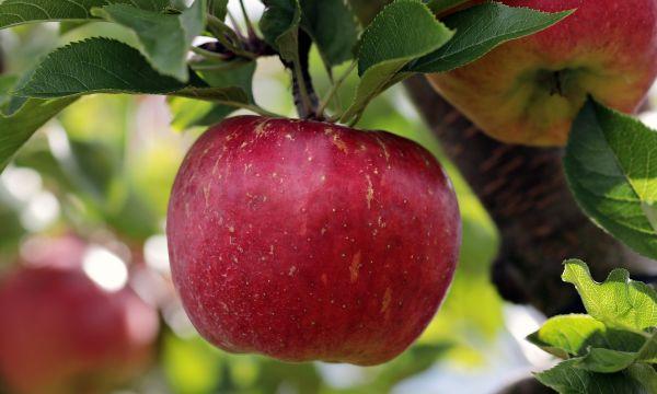 7 aliments pour FACILITER une bonne DIGESTION