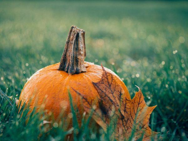 7 bonnes raisons de manger la citrouille d'Halloween
