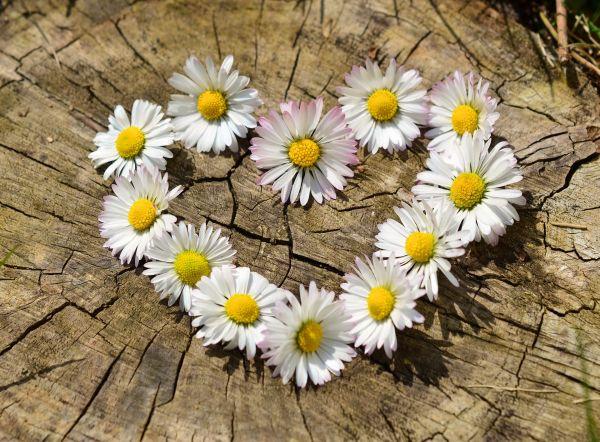 33 clés pour réconcilier le Cœur, le Corps et l'Esprit