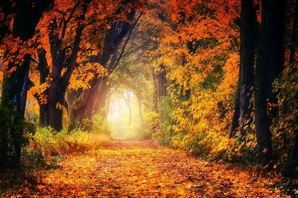 7 bonnes raisons d'adorer l'automne