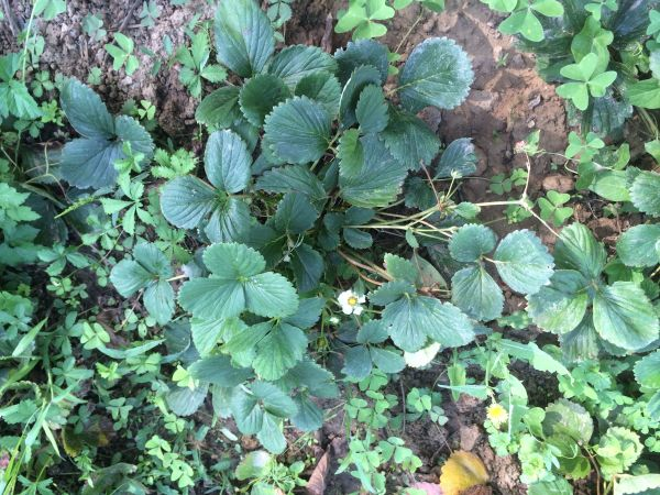 Les 7 choses à faire (ou ne pas faire) dans votre jardin en septembre