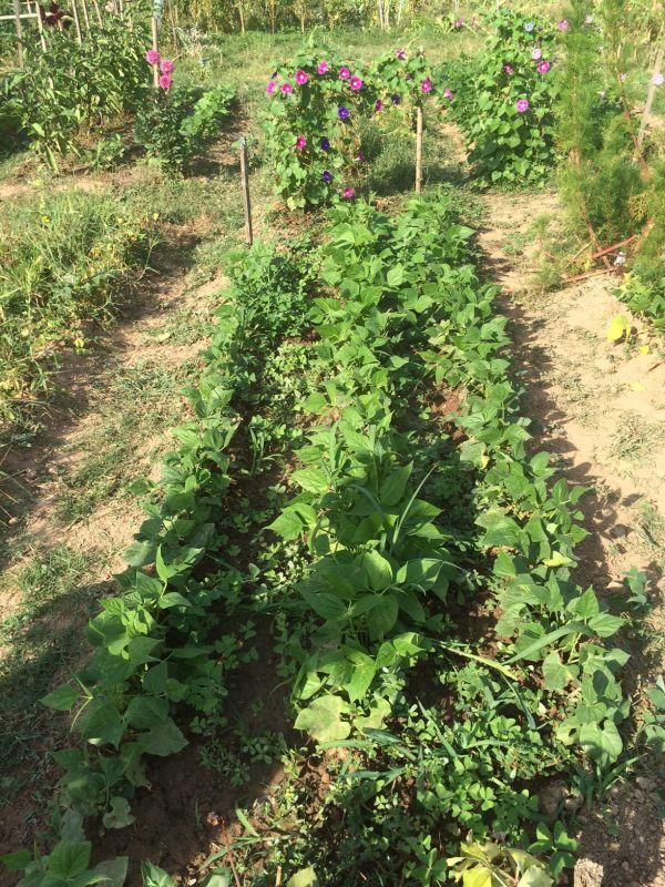 Les 7 choses à faire (ou ne pas faire) dans votre jardin en octobre