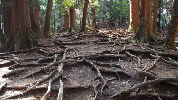 7 conseils pour développer des écosystèmes innovants et ... vivants !