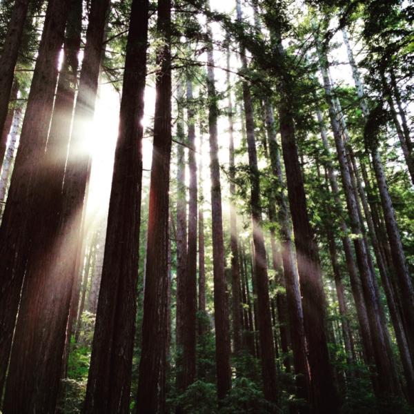7 conseils pour développer des écosystèmes innovants et vivants !