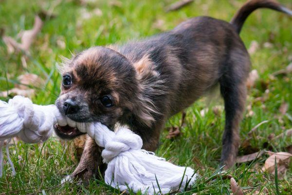 Adoptez 7 réflexes ECOLO avec votre chien