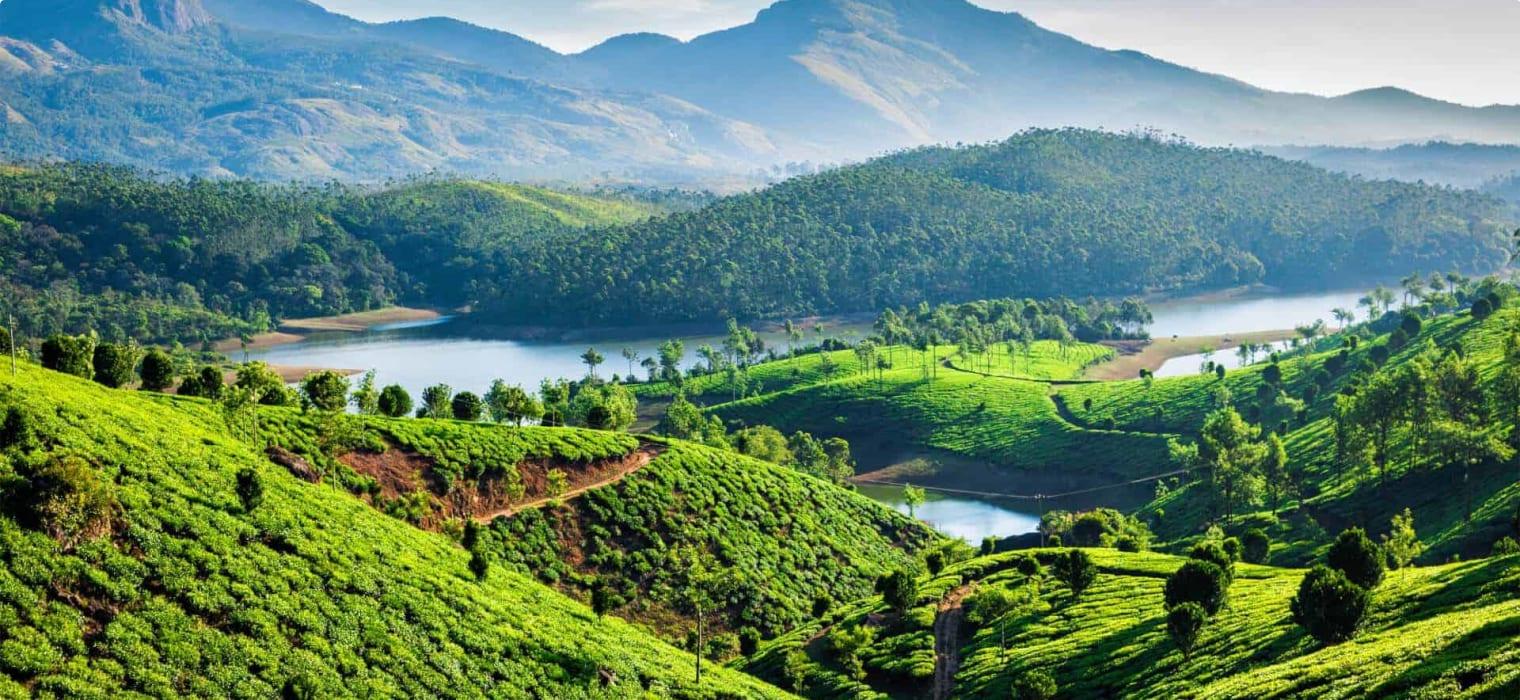 Kerala, India tea plantations