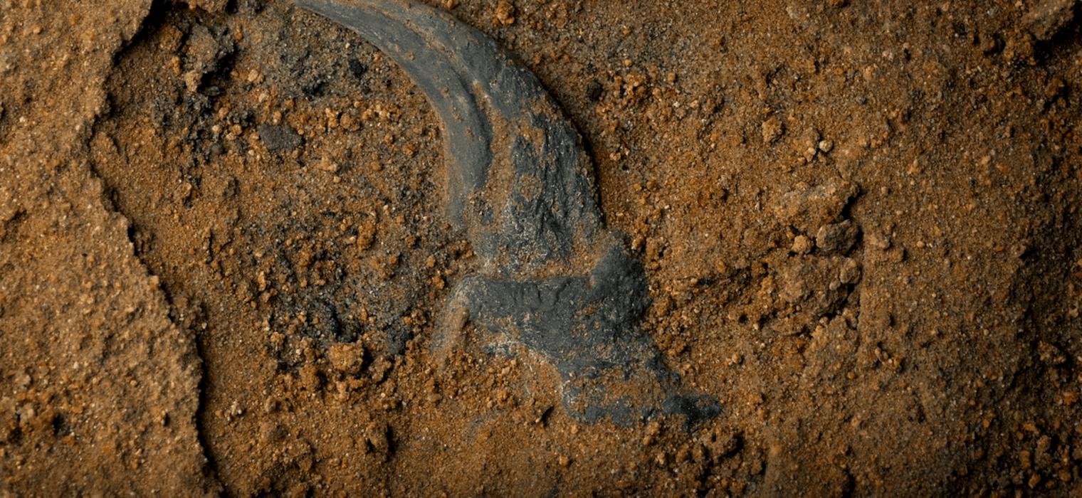 Dinosaur Fossil dig