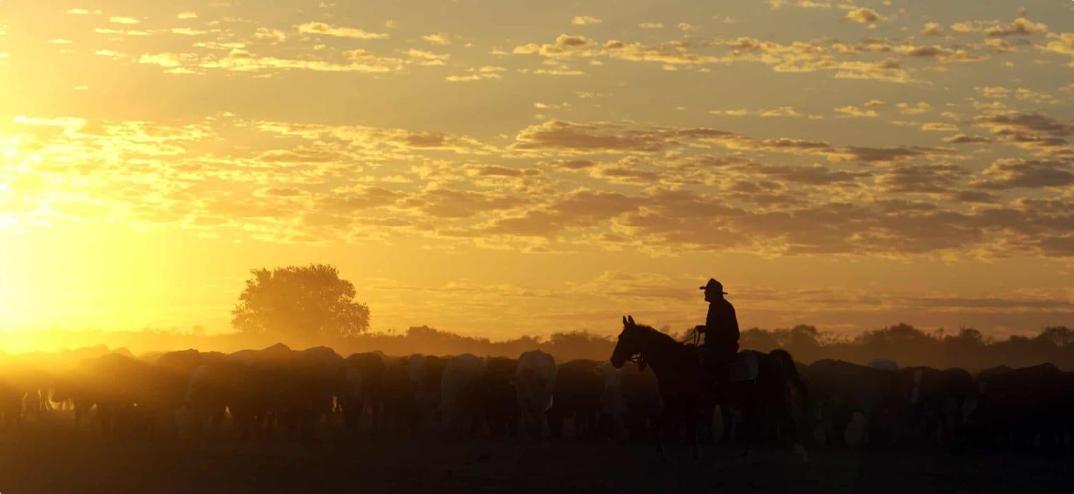 Birdsville cattle muster