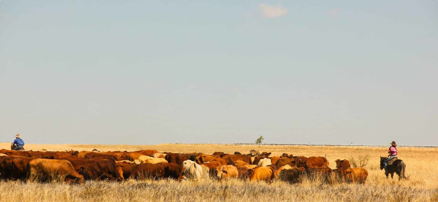 Early Development of the Kimberley Cattle Industry