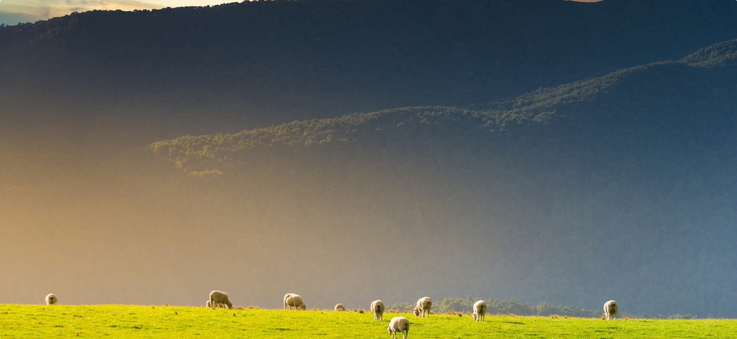 The McLean Family: New Zealand Sheep Nobility