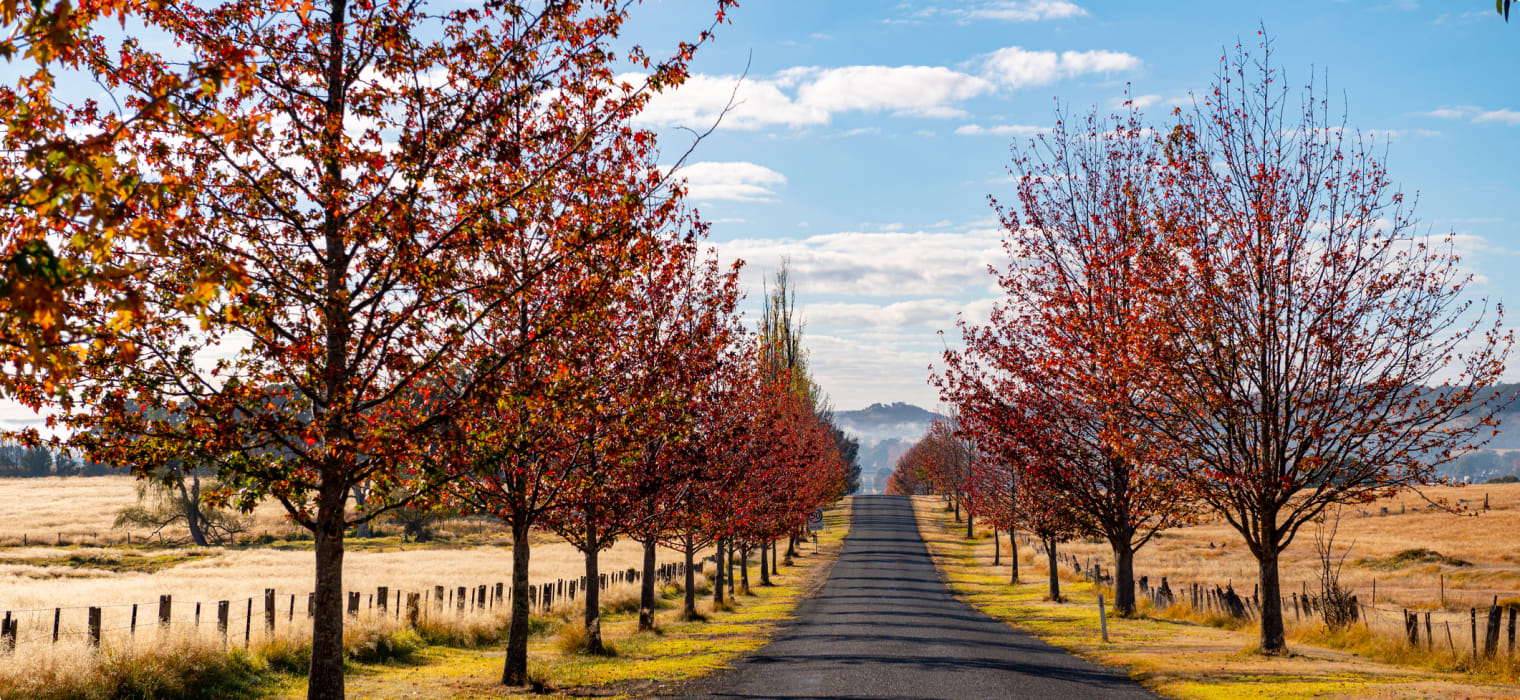 Tenterfield, New South Wales