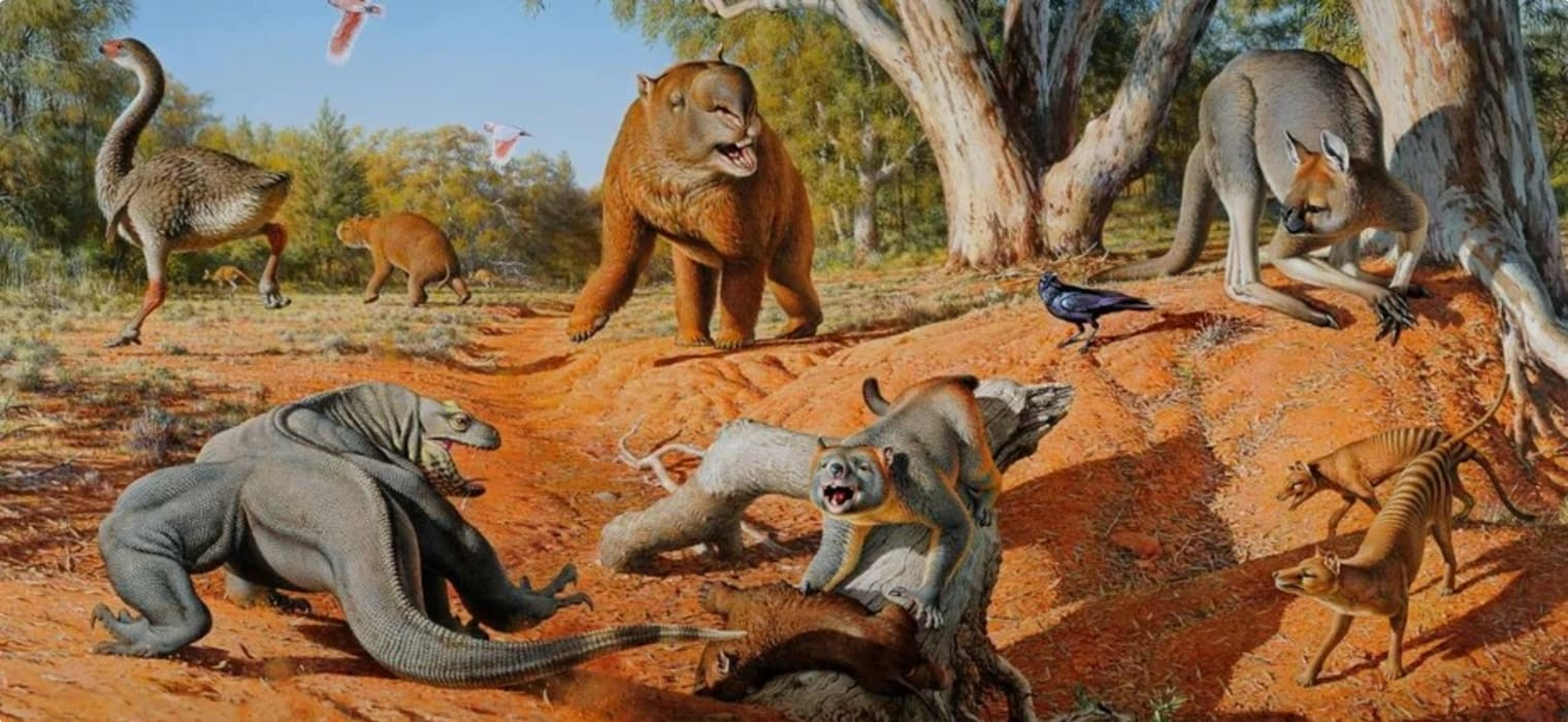 Escorted small group tour of Australia's megafauna