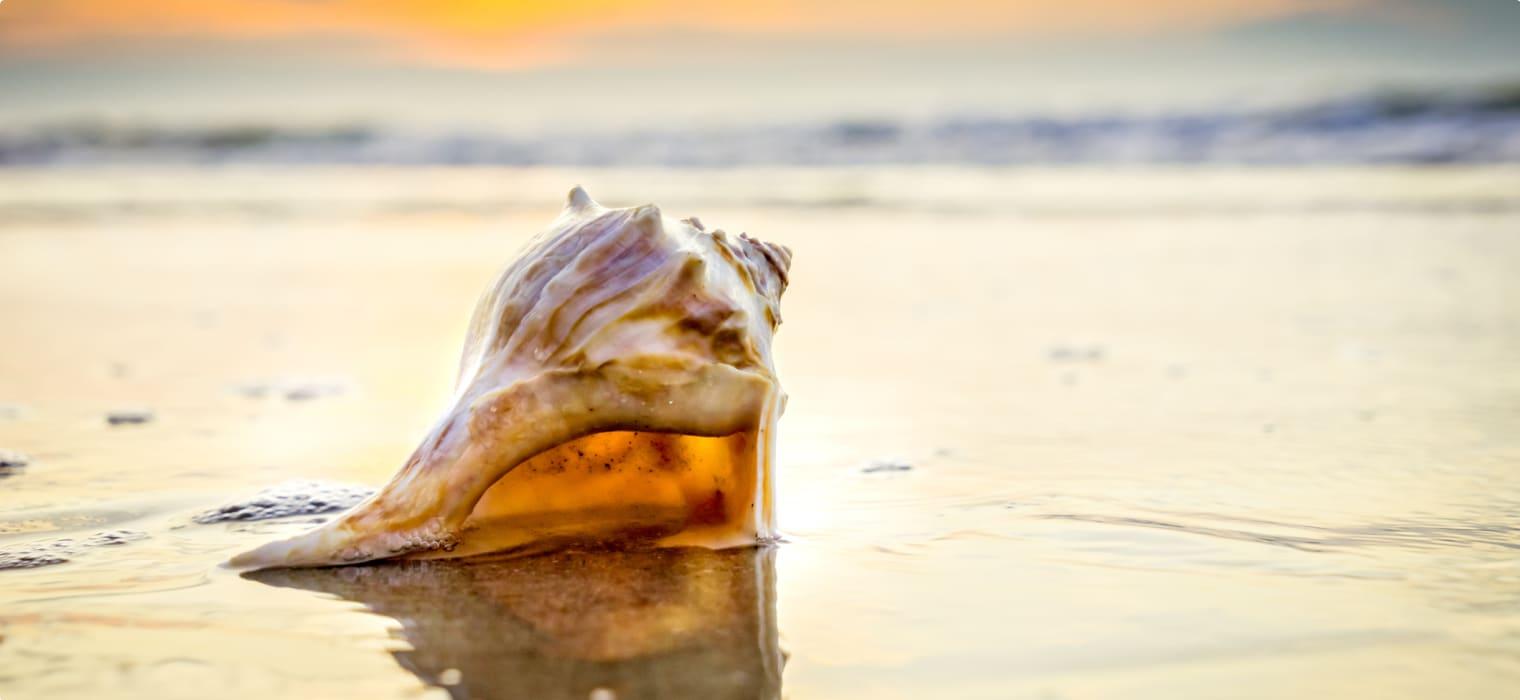 Ancient Aboriginal Shell Trade