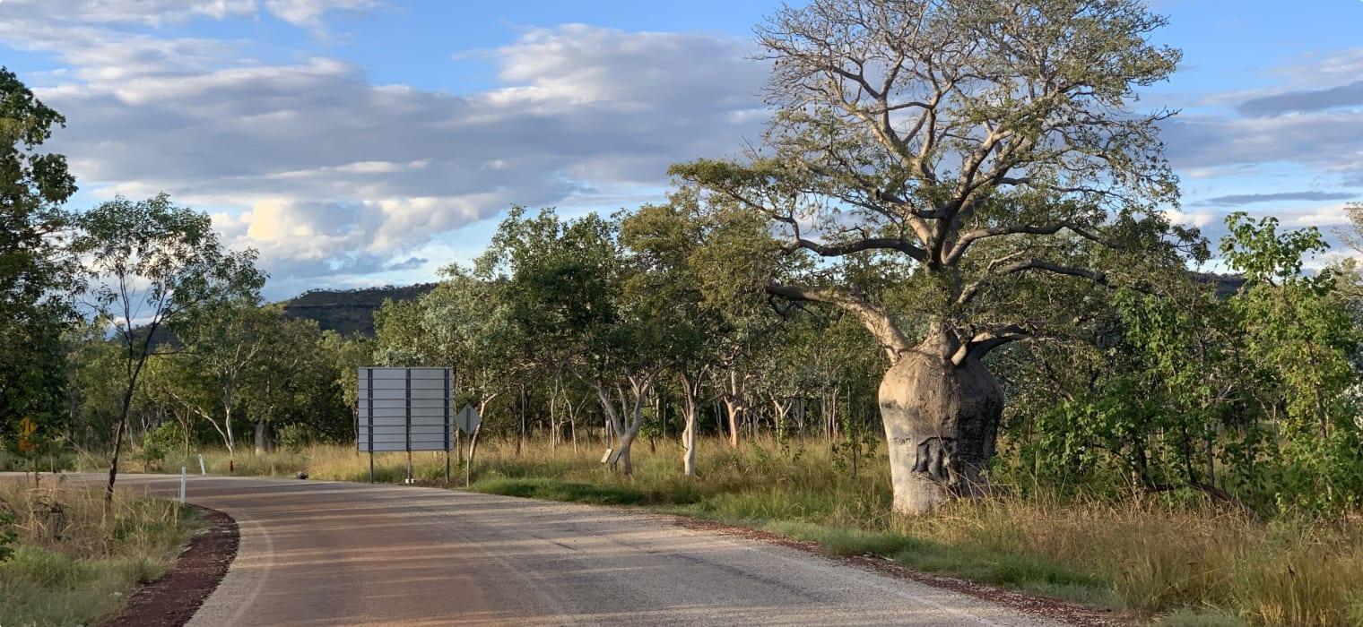 Boab tree WA