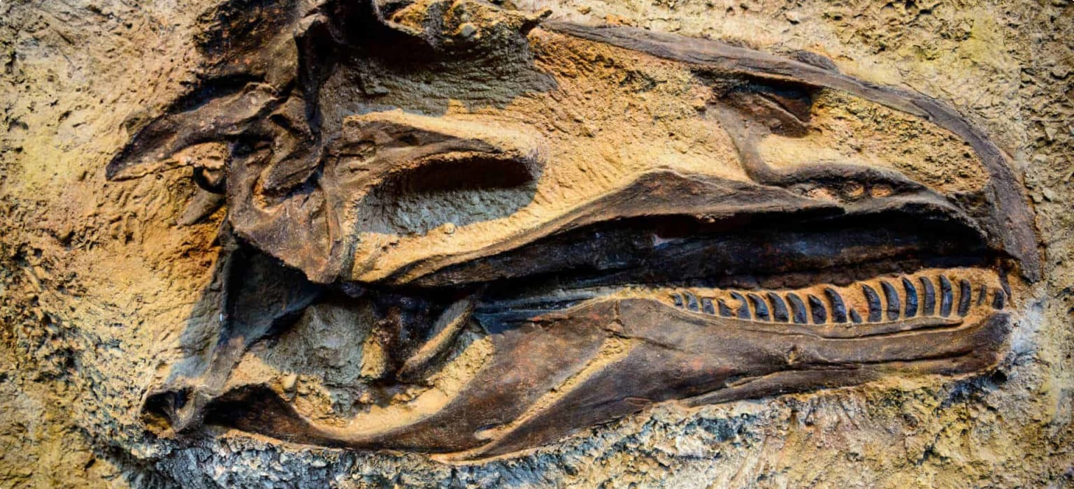 Dinosaur fossil travel