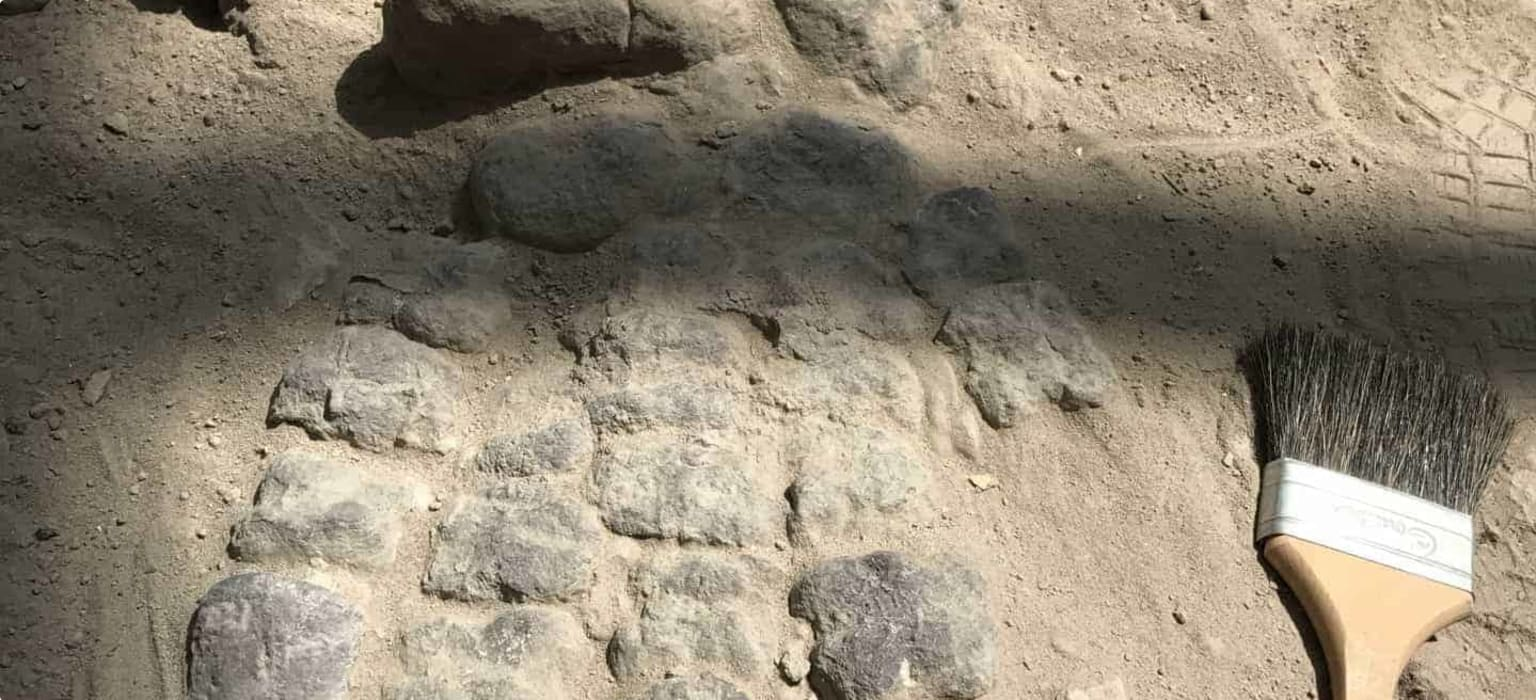 Dinosaur fossil, Argentina