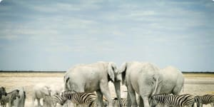 Namibia wildlife and culture