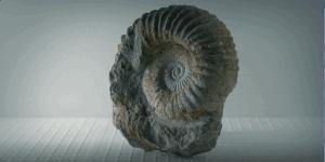 Dinosaurs, Paleontology, & evolution: 10 best books